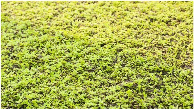 生态种植屋面植被满铺.jpg