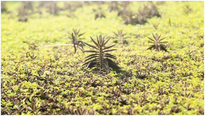 生態種植屋面多處綠植萌發.jpg